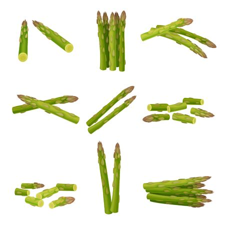 Fresh Green Asparagus Spears Vector Set with Scattered Stalks. Organic Raw Vegetarian Product Concept Vetores