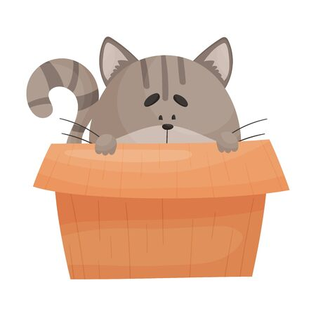 Cat Peeped Out From Cardboard Box Vector Illustration. Fluffy Domestic Pet Hiding in Carton Packaging Box