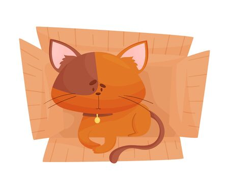 Fluffy Red Colored Cat Sitting Inside Carton Box Vector Illustration. Curious Kitty Resting in Container