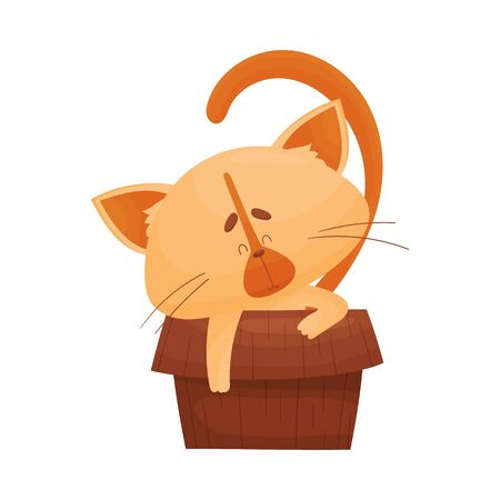 Fluffy Cat Sitting Inside Carton Box with His Paw Hanging Outside Vector Illustration. Curious Kitty Resting in Container
