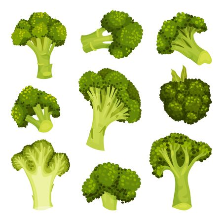 Broccoli Vector Set. Vegetable from Different Perspective Collection Illustration