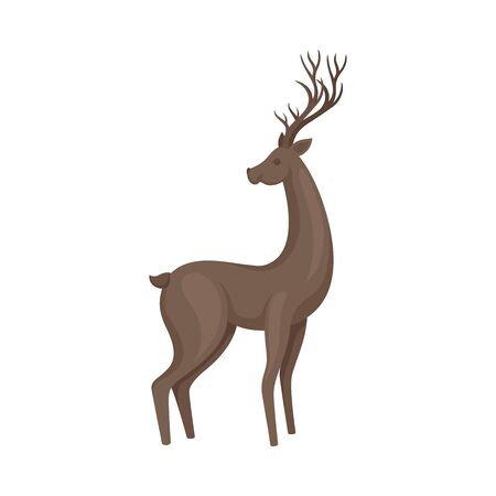 Brown Deer Animal in Standing Pose Vector Illustration. Wild Fauna Concept.