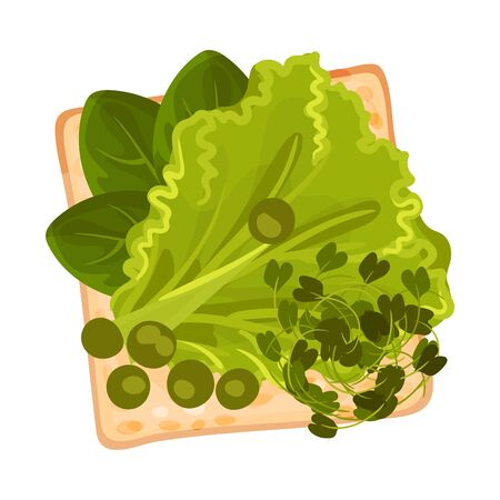 Roasted Multigrain Bread with Lettuce and Spinach Vector Illustration Çizim
