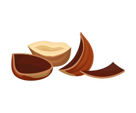 Cracked Hazelnut Isolated on White Background Vector Element