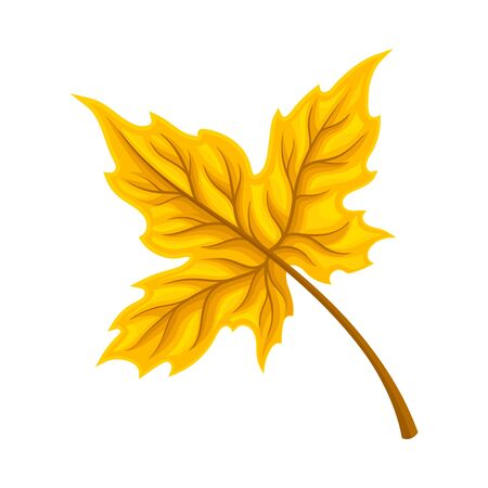 Bright Leaf Isolated on White Background Vector Element