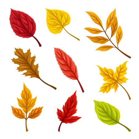 Bright Autumn Leaves Isolated on White Background Vector Set