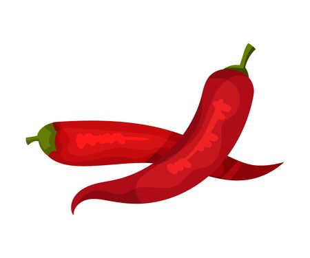 Red Hot Chilli Pepper, Fresh Organic Product, Culinary Ingredient Vector Illustration Vetores