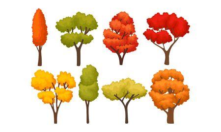 Diferentes árboles otoñales con follaje colorido brillante conjunto de vectores