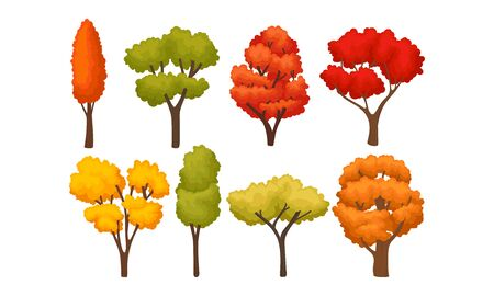 Different Autumn Trees with Bright Colorful Foliage Vector Set