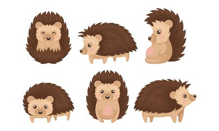 Cute Hedgehogs in Various Poses Vector Set. Friendly Forest Creature Collection Reklamní fotografie - 137752548