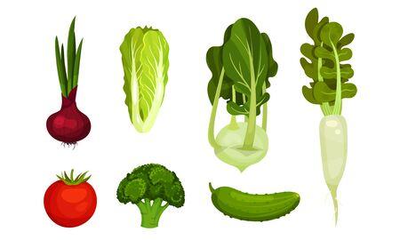 Fresh Vegetables Isolated on White Background Vector Set