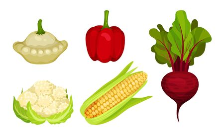 Fresh Vegetables Isolated on White Background Vector Set