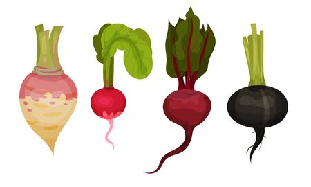 Root Vegetables with Top Leaves and Without Vector Set