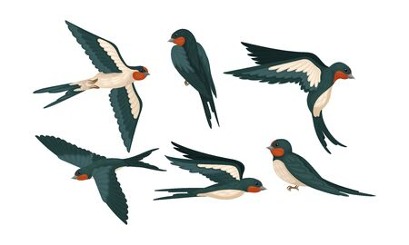 Barn Swallow with Long Tail and Sharp Wings Vector Set 向量圖像