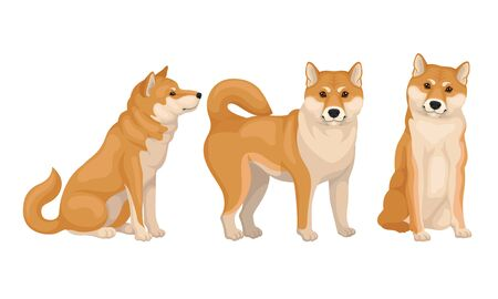 Akita Inu Dog Breed in Different Poses Vector Set