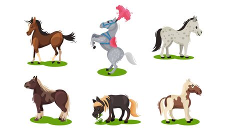 Different Horse Breeds Standing on the Ground Vector Set. Domestic Animals on Pasture 版權商用圖片 - 138251036