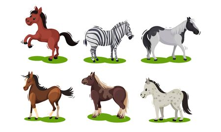 Different Horse Breeds Standing on the Ground Vector Set. Domestic Animals on Pasture