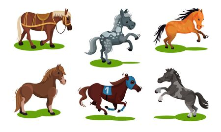 Different Horse Breeds Standing on the Ground Vector Set
