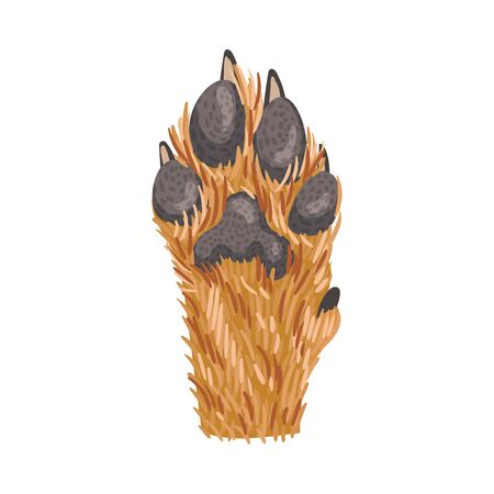 Animal Paw Isolated on White Background Vector Element. Pad with Sharp Claws. Furry Clutch Concept