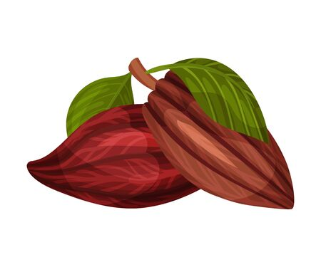 Whole Cocoa Pods Isolated on White Background Vector Illustration