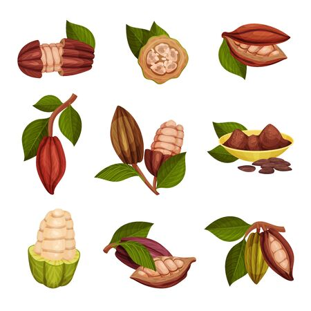 Cocoa Beans with Green Leaves Isolated on White Background Vector Set. Chocolate Dessert Component and Cocoa Powder Ingredient 일러스트