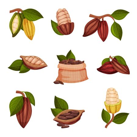 Cocoa Beans with Green Leaves Isolated on White Background Vector Set. Chocolate Dessert Component and Cocoa Powder Ingredient. Whole and Shelled Collection of Cocoa Beans