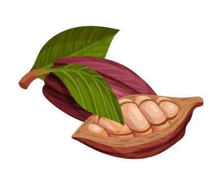 Cocoa Pod Cut into Halves with Many Beans Inside Vector Illustration. Organic Ingredient for Drink and Chocolate Manufacturing Concept Ilustracja