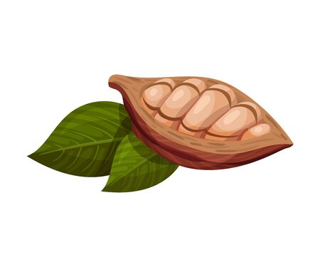 Shelled Cocoa Pod with Beans Inside Realistic Vector Illustration. Exotic Organic Nutrition Containing Theobromine Concept