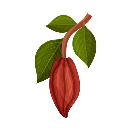 Whole Cocoa Pod Hanging on Tree Branch Vector Illustration