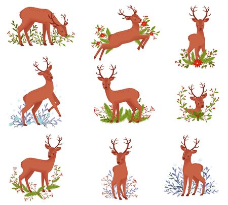 Deer Animal in Different Poses with Floral Elements Behind Vector Illustration