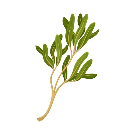 Kitchen Herb for Food Preparation and Garnish Vector Element