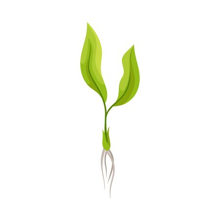Sprout of Grape Plant with Weak Roots Isolated on White Background Vector Element