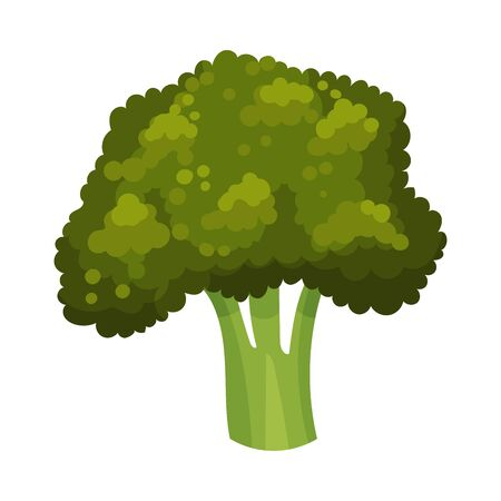 Broccoli Isolated on White Background Vector Illustration