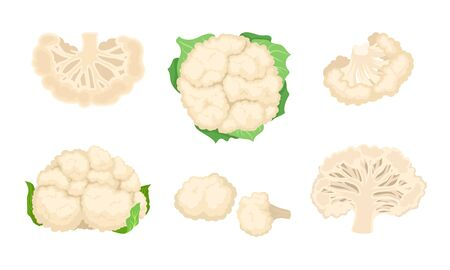 Cauliflower Cabbage with Separated Florets Isolated on White Background Vector Set Vetores