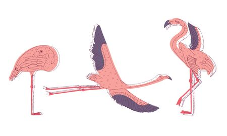 Exotic Pink Flamingos in Standing Pose and with Spread Wings Vector Set