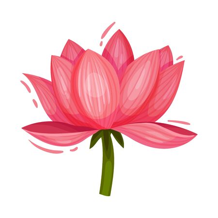 Pink Lotus Flower on Stem Decorative Vector Element Isolated on White Background  イラスト・ベクター素材