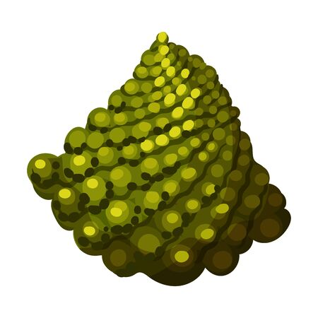 Blossom Cluster of Romanesco Cabbage Rich of Carotinoid Isolated on White Background Vector Illustration. Organic Vegetarian Product Concept Ilustração