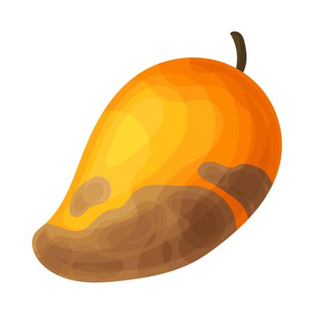Spoiled and Rotten Mango Fruit with Skin Covered with Stinky Rot Vector Illustration. Bad and Unhealthy Food Concept