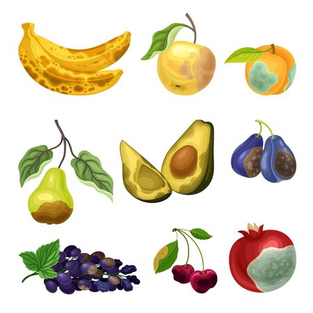 Rotten Fruits with Stinky Rot Covered the Skin Vector Set Illusztráció