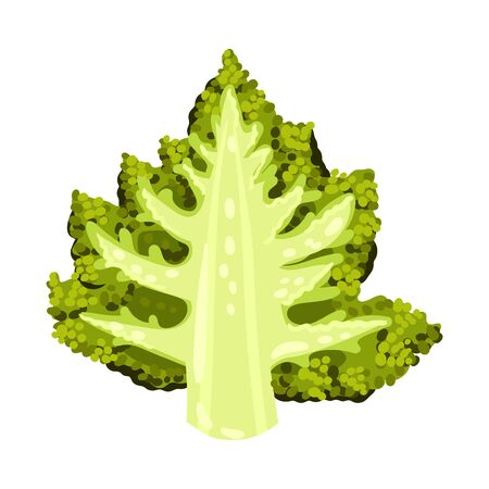 Blossom Cluster of Romanesco Cabbage Cut in Half Isolated on White Background Vector Illustration