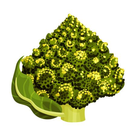 Blossom Cluster of Romanesco Cabbage Rich of Carotinoid Isolated on White Background Vector Illustration Ilustração