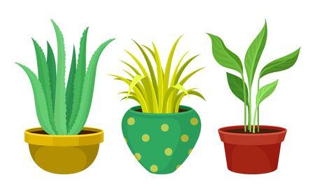 Indoor Plants Growing in Ceramic Pots Vector Set