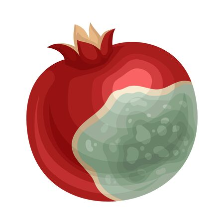 Spoiled and Rotten Pomegranate Fruit with Skin Covered with Stinky Rot Vector Illustration