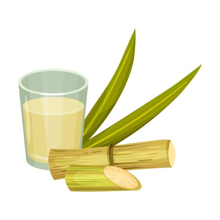 Sugar Cane Strong Unbranched Stems with Sugar Juice Poured in Glass Vector Illustration