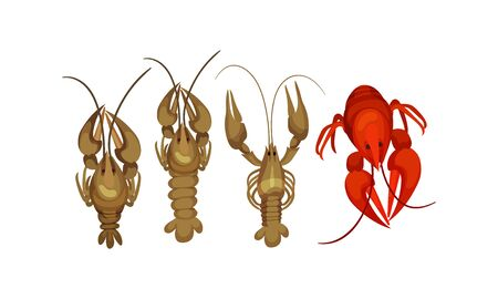Lobsters with Thick Shell and Strong Chelate Limbs Vector Set