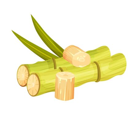 Cut and Bald Sugar Cane Stems Vector Illustration