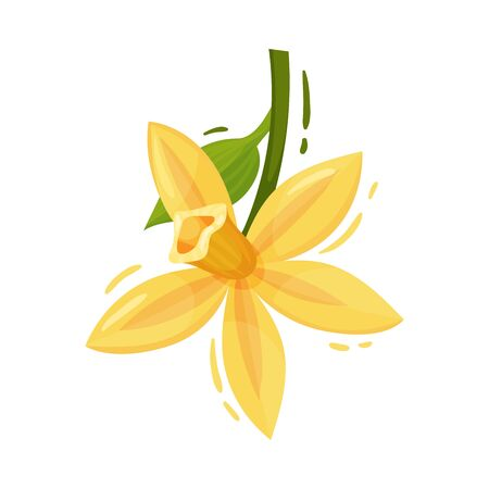 Vanilla Blooming Flower with Green Leaves Isolated on White Background Vector Decorative Element