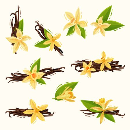 Vanilla Flowers and Pods or Sticks Isolated on White Background Vector Set Ilustrace