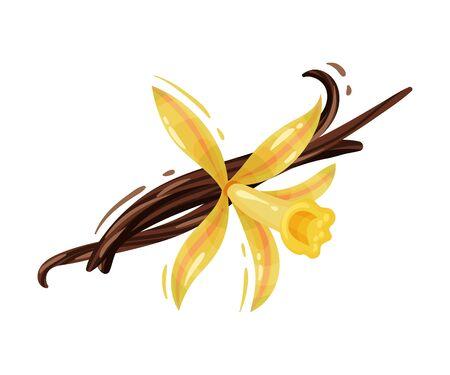 Fleur de vanille et bâtonnets séchés isolés sur fond blanc Composition vectorielle. Ingrédient alimentaire aromatique et concept d'épices biologiques