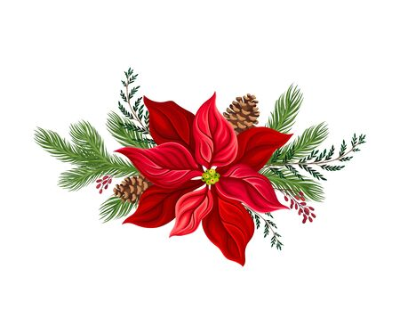 Euphorbia Red Flower Arranged with Fir Tree Twigs and Red Berries Branch Vector Illustration